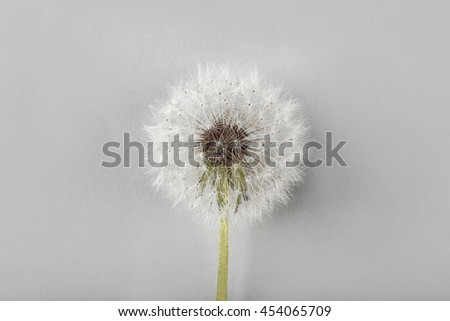 Dandelion seed head on color background, close up - stock photo