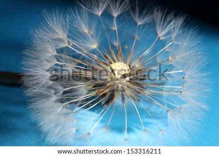 Dandelion seed on a blue and black background.