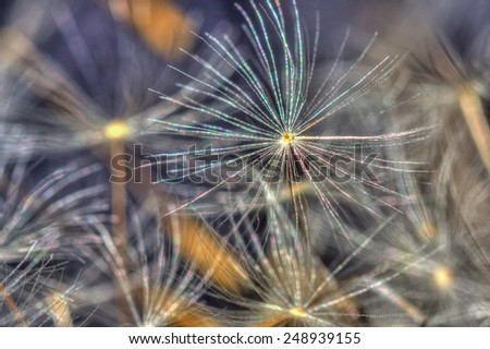 Dandelion seed on the ground with others - stock photo