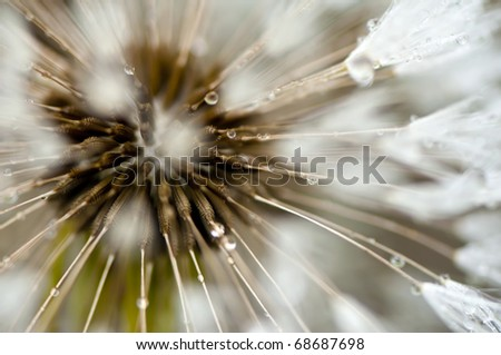 Dandelion seed with dewdrops, shallow DoF - stock photo