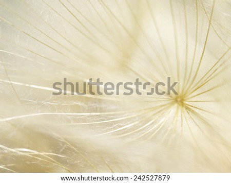 Dandelion seeds, high key with tiny depth of field - stock photo