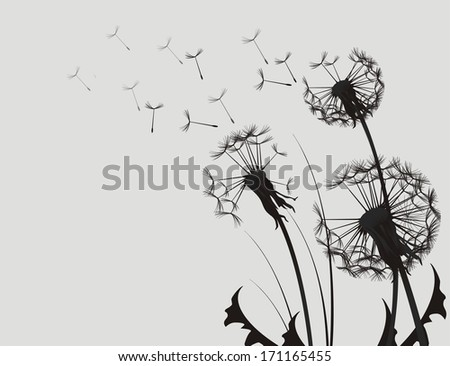 Dandelion Silhouette Black and White Illustration.
