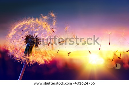 Dandelion To Sunset - Freedom to Wish  - stock photo