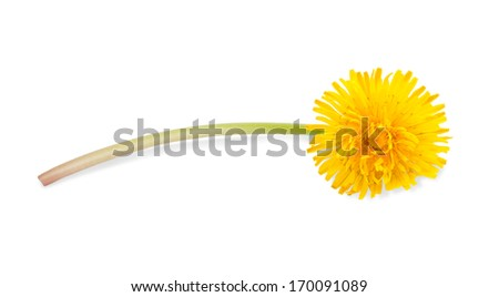 dandelion with flower isolated on white - stock photo