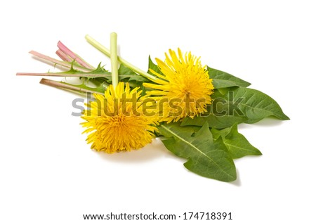 dandelion with flowers isolated on white background - stock photo