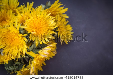 Dandelions on black texture with empty space for text  - stock photo