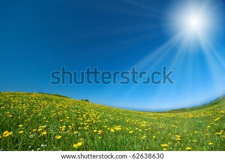 Dandelions under blue sky - stock photo