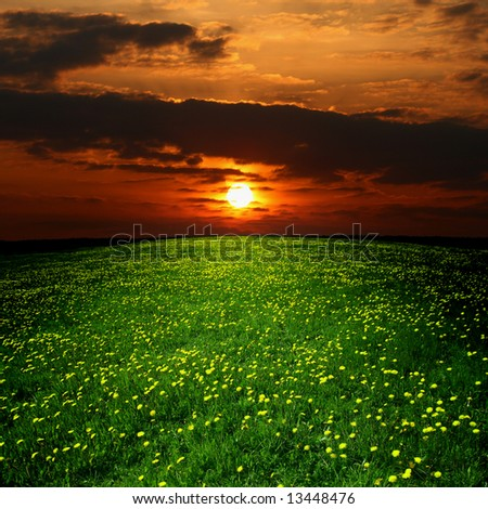 dandelions under sunset sky