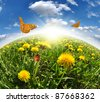 dandelions with butterflies in the meadow - stock photo