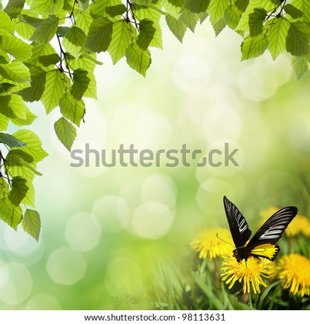 dandelions with butterfly in the meadow - stock photo