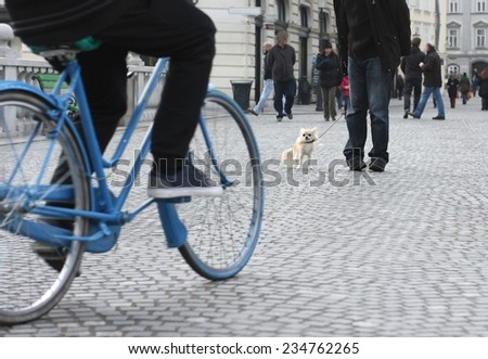 Danger of heavy traffic while walking a small city dog, chihuahua and bicycle - stock photo