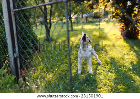 Dangerous aggressive dog behind the fence - stock photo