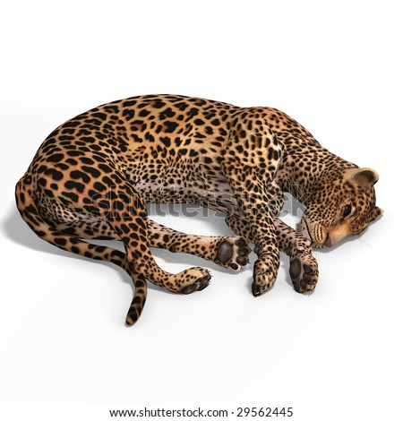 Dangerous Big Cat Leopard With Clipping Path Over White