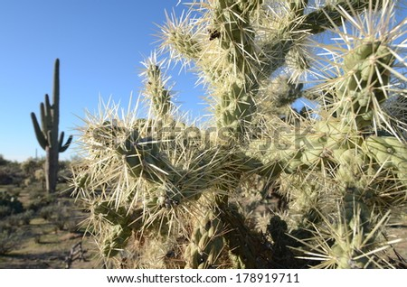 Dangerous Cactus on A Hot Desert Day