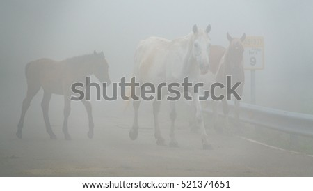 Dangerous Foggy road with horses in the middle