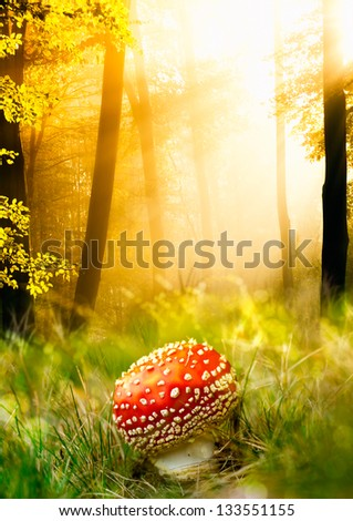 Dangerous red mushroom in the autumn forest with lights - stock photo