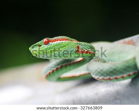 Dangerous snake with red-fire eyes