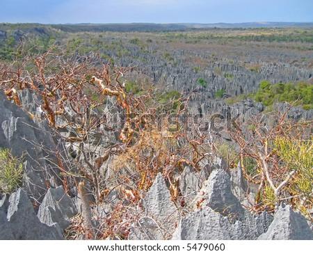 Dangerous Tsingy in Madagascar. - stock photo