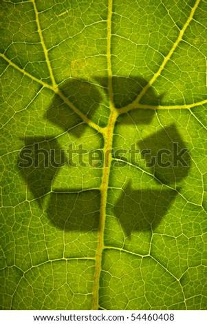 Dangers on leaf - stock photo