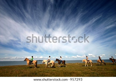 danish horses on a field in the summer - stock photo