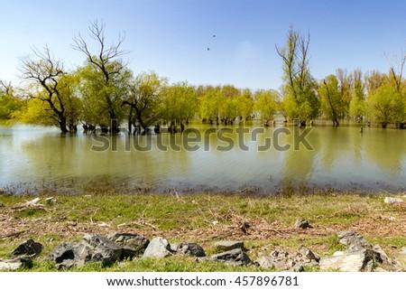 Danube delta tranquil scenery - stock photo