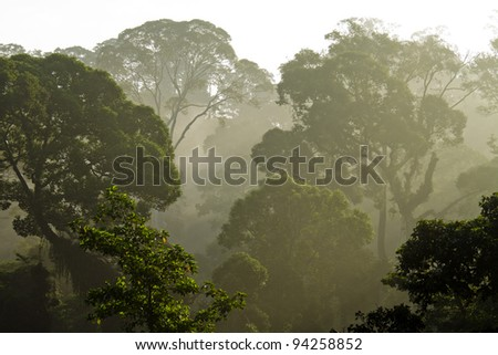Danum Valley,Sabah - Borneo - stock photo