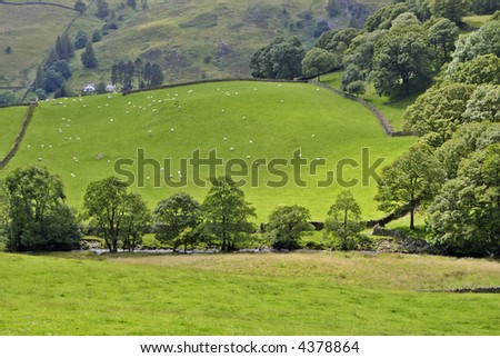 Dappled sunlight on a Summer field in the English Lake district. Sheep can be seen grazing in the distance with a farmhouse behind and a river flows behind a line of trees in the foreground - stock photo