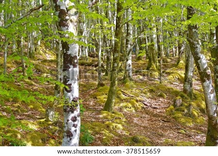 Dappled woodland, West Coast of Scotland