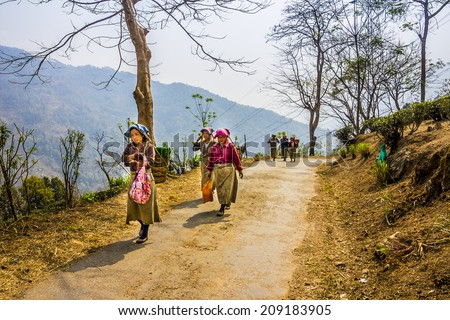 DARJEELING, INDIA - MARCH 14, 2014: tea pickers in colorful clothes are walking through a tea plantation of Darjeeling. - stock photo