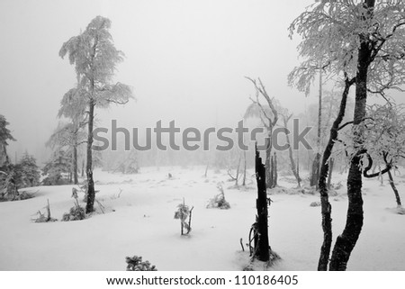 Dark and Misty Forest with Dead Trees and Trunks in Winter Landscape (black & white). - stock photo