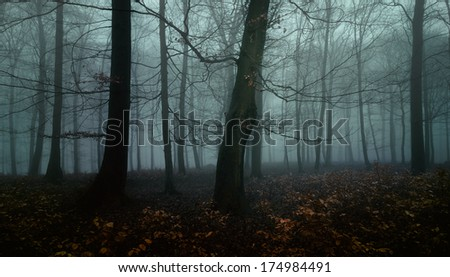 Dark autumn forest - stock photo
