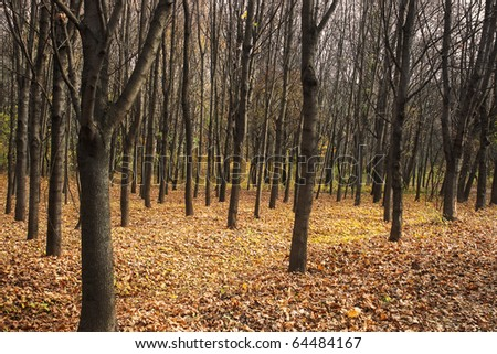 Dark autumn forest with fallen yellow leaves at dusk