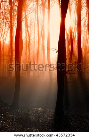 Dark autumn forest with the first light of the sun. - stock photo