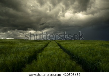 Dark background from rye field under dramatically cloudy sky before summer storm. - stock photo