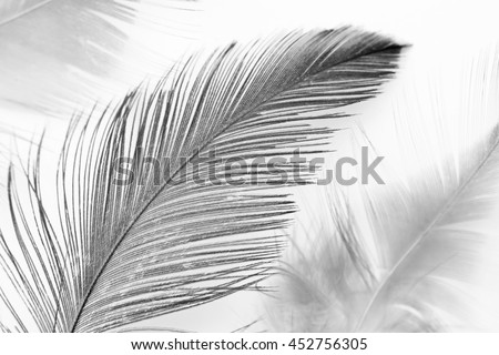 dark black feather background