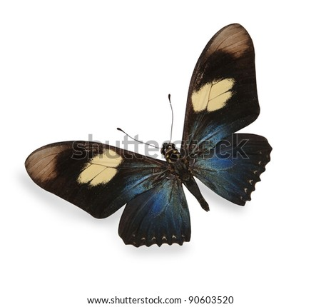 Dark blue and black butterfly isolated on white - stock photo