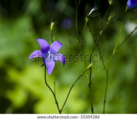 Dark blue flower on a green background - stock photo