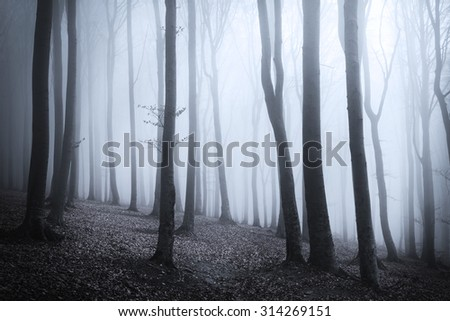 Dark, blue fog in the forest - stock photo