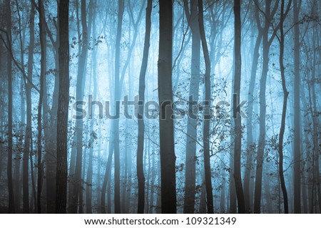 Dark blue spooky forrest with trees in fog - stock photo