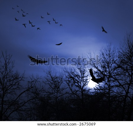 Dark blue Sunset with Birds and Trees silhouette.