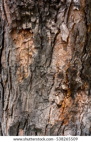 Dark brown bark with light orange spots and long vertical lines of the tree in sunshine and shadows, old wooden bark as background