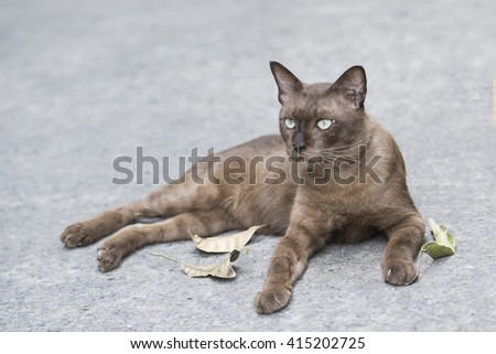 dark brown cat sit on the floor ,looking around