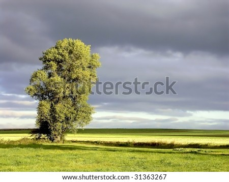 Dark clouds and early autumn tree in grassland at sunrise. - stock photo
