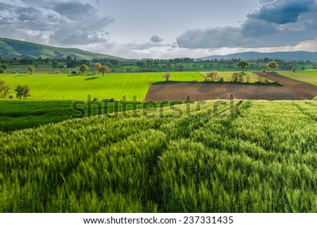 Dark clouds over green wheat field in Giano, Umbria, Italy