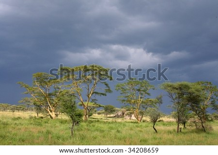 dark clouds over Typical landscape of serengeti national park in tanzania, africa