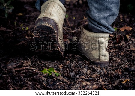 Dark Color tone. Traveler shoe step on Young plant growing on organic soil, old leaf in the forest wet after raining