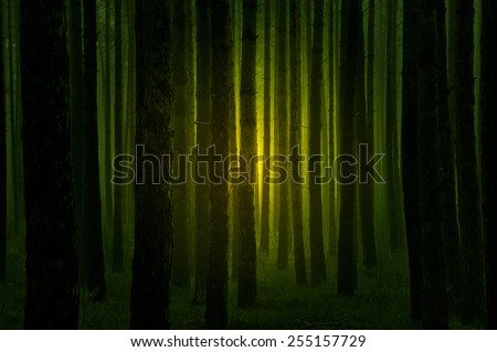 Dark creepy forest at night with a mysterious light between the trees - halloween concept - stock photo