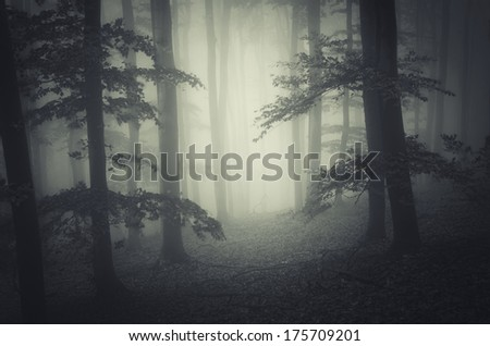dark dreamy forest with fog - stock photo