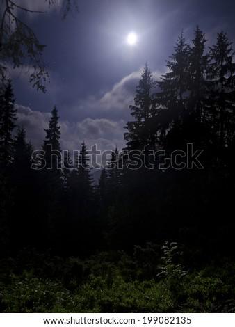 Dark fir tree forest under white moonlight - stock photo