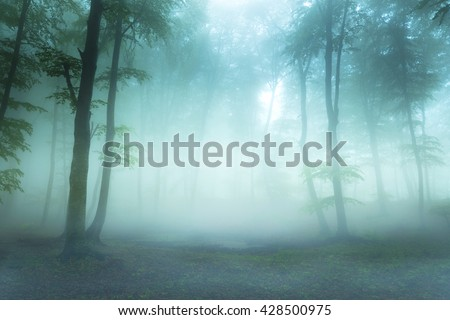 Dark fog into the forest